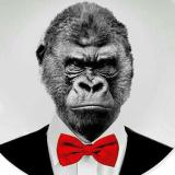大猩猩足球推荐